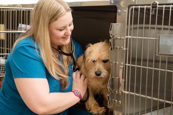 Our hospitalized patients are regularly assessed by an Animal Health Technologist.